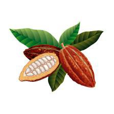 [BF-LC] Какао-бобы / Cocoa beans